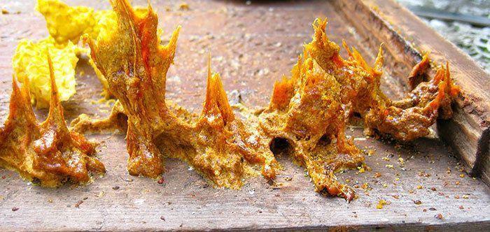 benefits of propolis